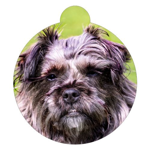 Affenpinscher Picture ID tag